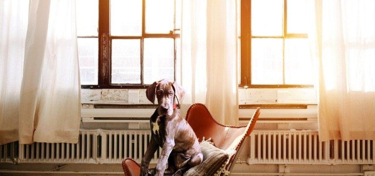 dog-2871914_640